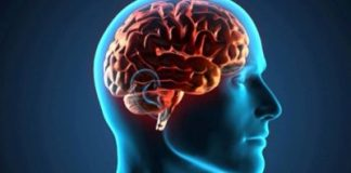 Cerebro humano (Cortesía UNIVERSITAM)
